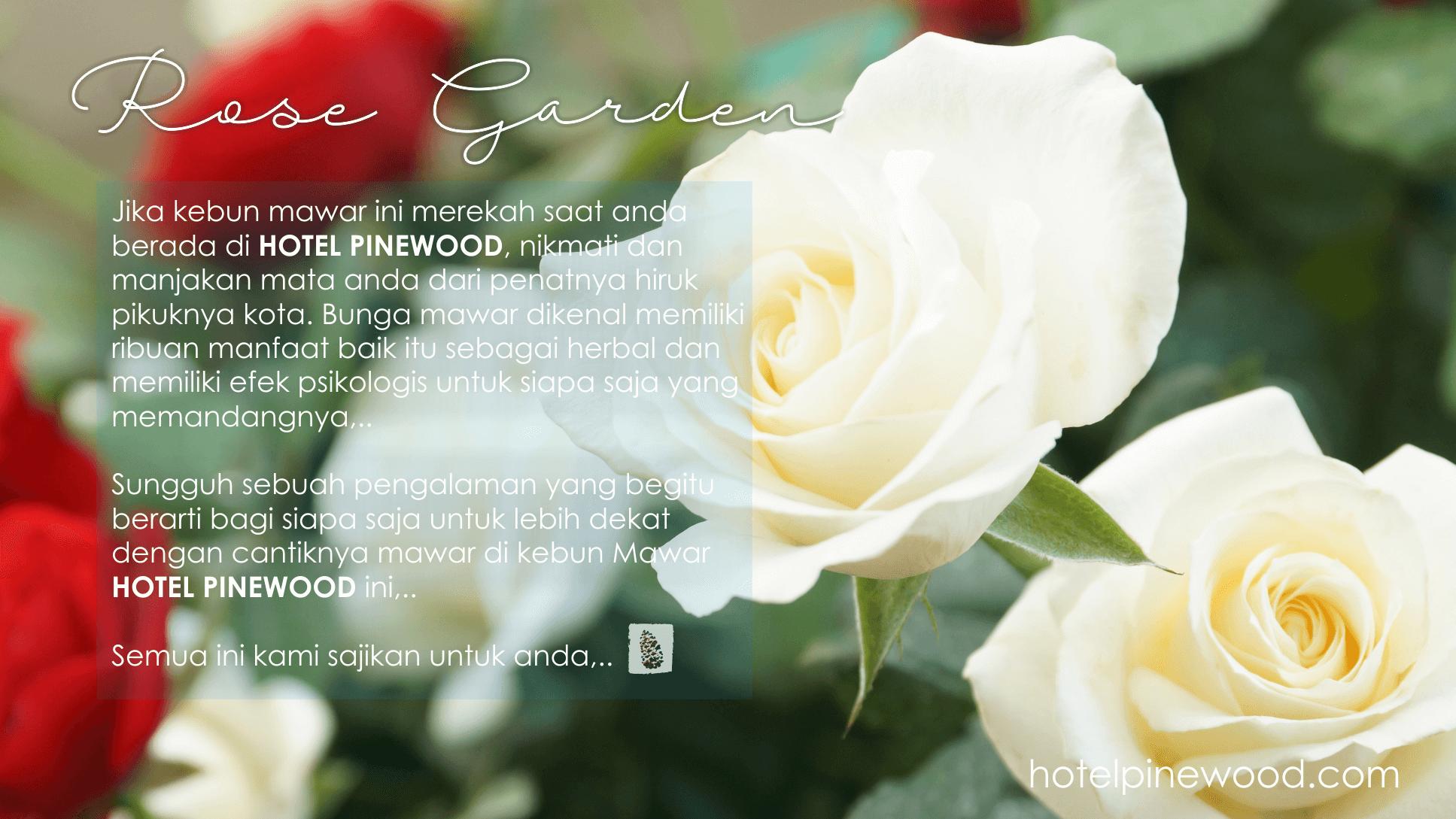 rose garden_box1
