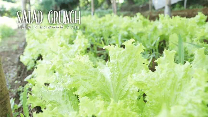 salad crunch